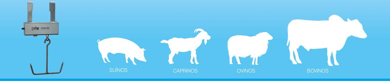 Suínos, Caprinos, Ovinos, Bovinos